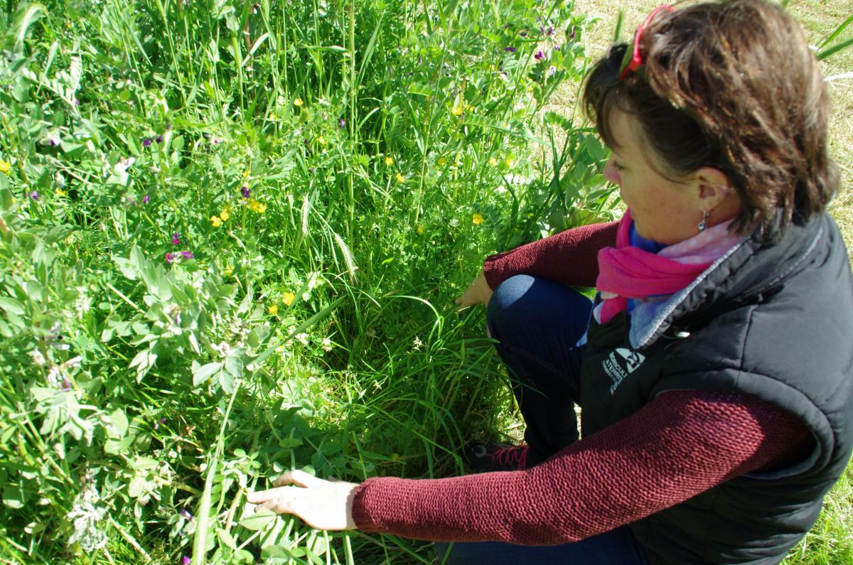 De l 39 int r t des prairies sous couvert mon cultivar levage - Chambre d agriculture de la mayenne ...