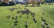 Stop à la présence de l'élevage dans les accords de libre-échange. CP : G.BLANCHON/Cniel