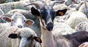 Les éleveurs des Bouches-du-Rhône ont décidé de se mobiliser et de permettre aux consommateurs de s'approvisionner directement auprès des producteurs. CP : DR.