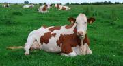 « Dans la nouvelle organisation, les organismes de sélection et les entreprises de conseils en élevage sont les binômes de demain », Pascale Parisot, directrice d'Allice.