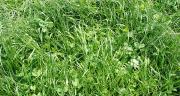 La production de lait bio augmente grâce à la meilleure efficacité des exploitations laitières biologiques, et à une année 2014 particulièrement lactogène avec un climat favorable à la pousse de l'herbe. Photo : N. Tiers/Pixel image