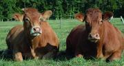 La 30e campagne de la Station nationale de qualification de Lanaud se poursuit avec la vente des taureaux qualifiés de la 3e série les 22 et 23 janvier. Ces deux ventes se déroulent aux enchères dans le ring des ventes du Pôle de Lanaud.