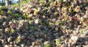 Le Betador est obtenu par broyage, pressage et ensilage de la betterave. Le produit est consommable 48h après fermentation. Photo : N.Tiers/Pixel Image.