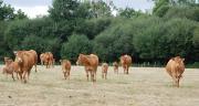Près de 600 animaux déclarés provenant de 207 élevages et de 38 départements sont recensés pour l'édition 2016.