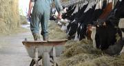 Les conditions pluvieuses de l'année 2013 ajoutent des difficultés alimentaires aux problèmes économiques déjà rencontrés par les élevages aubois.
