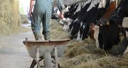 55% de correcteur azoté type tourteau de soja 48 peut être remplacé par 2,4 kg MS de TTHP. Photo: M.Ballan/Pixel image