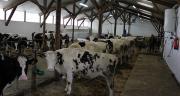 Les candidats à l'élevage de génisses sont plutôt des gens qui arrêtent le lait et qui cherchent un autre usage à leurs bâtiments. Photo: Magalie Ballan/Pixel image.