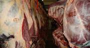 Embargo russe sur les exportations agricoles, afflux exceptionnel des femelles de réforme: le marché de la viande bovine se trouve dans une situation critique selon le Copa-Cogeca, qui exhorte la Commission européenne à agir sans délai.
