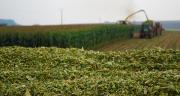 Green+ : une génétique qui résiste au stress hydrique. ©M.Lecourtier / Média et Agriculture