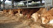 La situation économique des exploitations de viande bovine n'est pas au mieux de sa forme selon les observations effectuées durant 10 ans grâce au réseau Inosys. Photo : DR