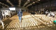 La défense de la juste rémunération au producteur est le premier combat de Coop de France Métiers du lait. CP : DR