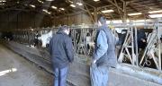 """La démarche """"Qualité Conseil Elevage"""" vise à améliorer les prestations de conseil des Ecel auprès des éleveurs. Photo: A. Cotens/pixel images"""