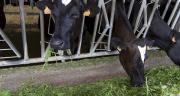 « Si les animaux sont bien nourris, l'homme se portera mieux ». Photo: L.Theeten/Pixel Image