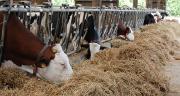 Protecow est un groupe d'échange pour les éleveurs laitiers de la zone transfontalière franco-belge.