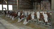 À l'échelle de l'exploitation, le meilleur niveau de produits, associé à des charges opérationnelles maîtrisées, permettent aux élevages en montbéliarde de générer plus de ressources financières ( EBE).