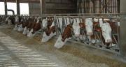 Une convention cadre vient d'être signée entre l'Inrae et le groupe Adisseo pour améliorer les solutions nutritionnelles pour animaux. CP : Danielle Bodiou