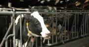 Stefan van Rumst produit 3,4 millions de litres de lait par an avec 300 vaches laitières sur 178 ha. CP : H.Flamant/Terroir Est