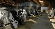 L'apport d'AADI (acides aminés digestibles dans l'intestin) indispensables permet de maximiser les performances laitères tout en maîtrisant les coûts. ©H.Flamant/Terroir Est