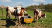 En dix ans, la filière laitière a économisé 20 % des volumes d'eau. ©N.Tiers/Pixel6TM