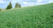 Afin d'accroître leur efficience dans ce nouveau contexte climatiques, les variétés pourraient être notées en mélanges afin d'améliorer les préconisations pour ces derniers. ©Pixel6TM
