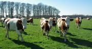 La longévité des animaux progresse avec l'indice de pâturage et la mortalité périnatale se réduit.