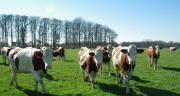 D'ici fin 2020, tous les éleveurs ruminants auront la possibilité de réaliser un diagnostic Cap'2ER® et pourront valoriser financièrement leurs progrès en matière de réduction des GES et du stockage de carbone. CP : M-D.Guihard/Pixel6TM.