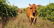 L'objectif du système OasYs est de vivre du lait en contexte d'aléas climatiques, en minimisant le recours aux ressources en voie de raréfaction (eau et énergie fossile). Mis en œuvre depuis 2013, le système est en place pour 20 ans. ©DR