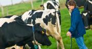 Aujourd'hui, nous entrons dans une nouvelle période délicate pour la filière laitière française et européenne. CP : C.Helsly/Cniel.