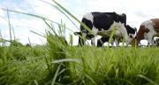 L'élevage de ruminants est responsable de 10% des émissions de GES en France. Photo : A. Cotens/pixel image