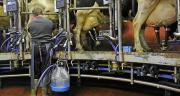 La production laitière moyenne par vache augmente de 260 kg. Photo Fotolyse/Adobe stock