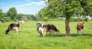 Début des versements des aides directes pour 285 000 agriculteurs. AdobeStock / Delphotostock