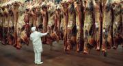 Le 6 août 2020, est paru un arrêté homologuant le nouveau cahier des charges pour le label Rouge gros bovins. Le terme « étourdissement » a finalement bien été conservé. CP : Bertrand photos/Adobe Stock
