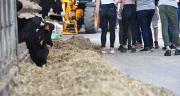 Avril et UniLaSalle lancent une chaire sur l'élevage et les enjeux sociétaux. ©AdobeStock/JeanLuc