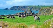 La collecte irlandaise a bondi de 13,5% par rapport à mars 2020. CP : Bob/Adobe Stock.