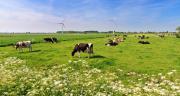 6 plantes de prairies toxiques pour les bovins. CP : dennisvdwater/Adobe Stock