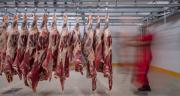 Le marché de la viande des gros bovins peine à s'améliorer. CP : mehmet/Adobe Stock