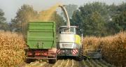 Les premiers chantiers d'ensilage de maïs pourraient commencer dès le 16 août prochain. CP : Wolfgang Jardstorff/Adobe Stock