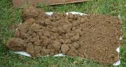 La méthode d'évaluation visuelle des sols mise au point par Graham Shepherd permet d'évaluer immédiatement et de manière efficace la qualité des sols et des pâturages avec une précision semblable à celle d'un spécialiste. Photo: D. Bodiou/Pixel Image