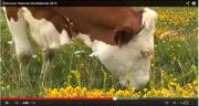 Cette année 240 animaux provenant de toute la France, et même d'Europe, seront exposés.