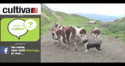 Huitième épisode de question de ration chez Guillaume Dunoyer en Haute Savoie.