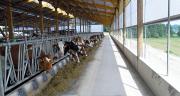 Les brise-vent jouent un rôle essentiel pour maintenir une ambiance saine dans les bâtiments d'élevage.