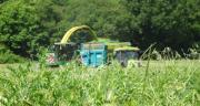La ferme de Thorigné-d'Anjou expérimente depuis plusieurs années un ensilage en association céréales-protéagineux . CP : ferme expérimentale Thorigné-d'Anjou