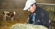 Pascal Droz-Vincent a commencé à proposer du sainfoin aux veaux femelles depuis cet automne. ©A.Coronel/Terroir Est
