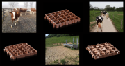 Des dalles recyclées et recyclables pour faciliter l'accès au pâturage. Photo : DR