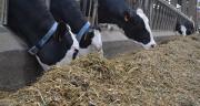 Le TMA joue un rôle dans les performances sanitaires et productives du troupeau.