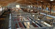 En France, le seuil des 100 vaches est souvent évoqué pour définir un troupeau de grande dimension.