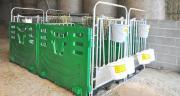 Les dimensions de la case à veaux EasyClean ont été adaptées, afin que les animaux puissent tourner facilement dans leur case. Photo: Jourdain.