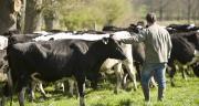 1000 euros seront versés d'ici la fin de l'année à l'ensemble des producteurs de lait en difficulté.  Photo : P. Dureuil/CNIEL