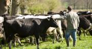 La rémunération de la plupart des éleveurs laitiers s'est dégradée en 2018, l'évolution du prix du lait n'ayant pas permis de compenser la hausse des coûts de production. ©P. Dureuil/CNIEL