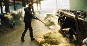 Les bénéficiaires de l'aide au répit sont surtout des hommes, dans la tranche d'âge 41-60 ans. Les branches professionnelles les plus représentées sont l'élevage lait et l'élevage viande.
